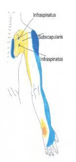 Shoulder Trigger Points Chart Neck Shoulder Arm And Hand Trigger Point Chart 4