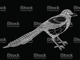 Small Picture Hand Drawn Magpie Illustration For Antistress Coloring Page With