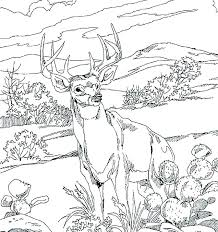 Wild Animal Coloring Pages Arctic Animals Wildlife