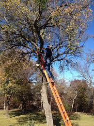 when this occurs our tree experts can be trusted for safe and efficient tree removal service in