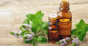 benefits of peppermint oil uses side