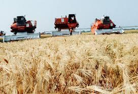 Как Россия из бензоколонки превращается в аграрного монстра  Жатва пшеницы