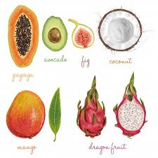pictures of different fruit. Interesting Different Different Fruits Painted With Watercolors Free Vector For Pictures Of Fruit T