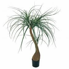 マイフラ】 通販/MAGIQ ミニノリナポット L グリーン アーティフィシャルフラワー 造花 FZ008815 観葉植物 【大型便】(幅  約85×高さ 約110cm 鉢径 約11.5×高さ 約13cm グリーン): MAGIQ(アーティフィシャルフラワー  造花)/全国にMAGIQ、花器、花資材などをお届けします。