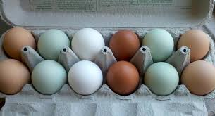 Image result for chicken eggs colors