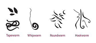 Dog Worm Identification Chart Dog Worms What To Do And How To Identify Them Naturpet