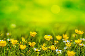 Free Spring Spring Background Flower Free Photo On Pixabay