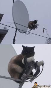 Resultado de imagem para sky gato