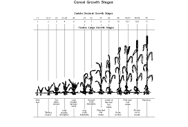 Wheat Growth Stages Chart Field Scouting Alberta Ca