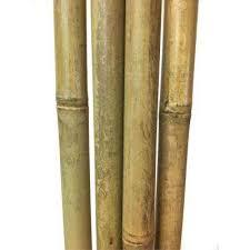 bamboo garden stakes. Diameter Tonkin Bamboo Pole 8 Ft. L, Set Of 5 Garden Stakes
