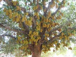EcoTravel Silent Valley National Park Kerala U2013 Indiau0027s EndangeredKerala Fruit Trees