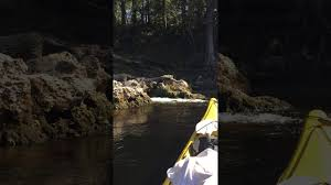 Suwannee River Solo Trip Paddling Com