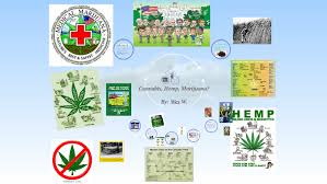 Marijuana is a drug? by wes whitner on Prezi