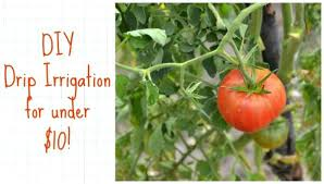 drip irrigation system diy pvc garden costs less