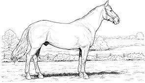 Disegno Di Cavalli Che Saltano Un Ostacolo Da Colorare Disegni Con