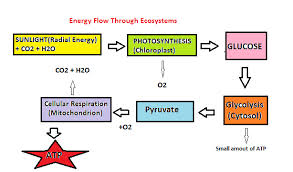 File Energy Flow Chart Png Wikimedia Commons