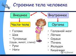 Презентация на тему Строение тела человека Организм человека  9 Строение тела человека ВнешнееВнутреннее