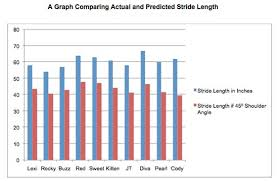 Stride Length Chart How Does A Horses Shoulder Angle Affect Stride Length