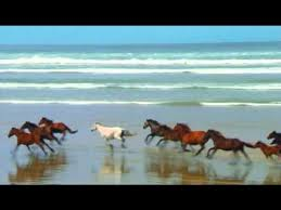 wild horses running through water. Fine Through Wild Horses Running Free To Through Water