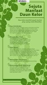 Ada beragam cara mengolah daun kelor yang bisa kamu lakukan. Cara Mengolah Daun Kelor Untuk Kanker Cara Mengolah Daun Sirsak Untuk Obat Hipertiroid Cara