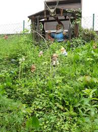 file garden gnome liberation front training c jpg