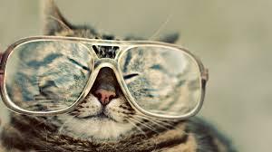 Cute Cat Wallpaper Good Morning Quotes ...