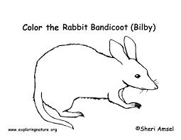 Small Picture Bandicoot Coloring Page