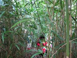day one at the botanic garden badgers and bamboo