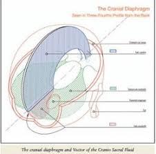 Cranial Reflexology Chart Positive Health Online Article Cranio Sacral Reflexology
