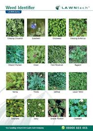 Getting Rid Of Weeds In Your Lawn Lawntech Care Guide