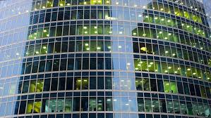 building an office. Office Windows In The Building From Glass, Outside View. Workers, Employers An