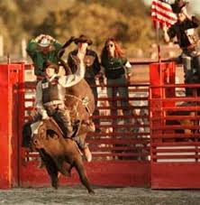 Rodeo not a game, say bull-riders   Archive   fredericknewspost.com