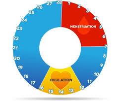 Fertility Window Chart Bedowntowndaytona Com