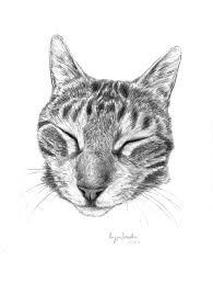 Disegni Gatti Disegno Libero Con Disegni Di Gatti Difficili E