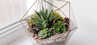 how to make your own terrarium. Unique How If You Long Over Glossy Magazine Photos Of Perfect Landscapes And Gardens  But Just Donu0027t Have The Space To Grow Your Own Weu0027ve Got Project Spur  With How To Make Your Own Terrarium Elements Living