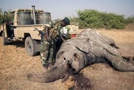 Resultado de imagem para O mundo se une no combate a crimes contra a vida selvagem