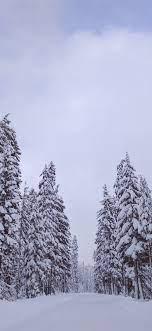 Trees, white snow, winter 1242x2688 ...