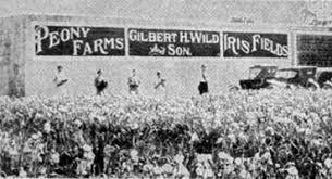 About Gilbert H. Wild & Son