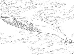 Small Picture Whales coloring pages Free Coloring Pages