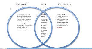 compare contrast mesopotamian ian civilizations essay  compare contrast mesopotamian ian civilizations essay