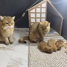 Смешные котики (meow__meow__cats) instagram просмотр фото и видео |  hypometr.ru