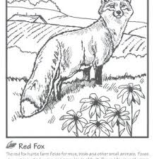 Farm Animals Coloring Book Free Best Preschool Coloring Pages