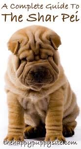 Shar Pei Dog Breed Guide Checking Out Their Pros And Cons