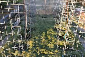 Diy tomato cage Tomato Plants The Real Farmhouse Diy Beefy Tomato Cage For Only 6