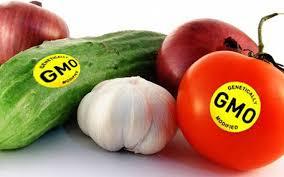 Znalezione obrazy dla zapytania zywnosc GMO zdjecia