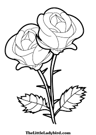 Small Picture 12 roses coloring pages for kids Print Color Craft
