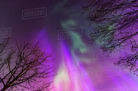 Purple Pink Northern Lights Green Purple And Pink Northern Lights Overhead Anchorage Southcentral Alaska D869_98_735