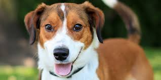 animal shelter dogs for adoption. Beautiful Shelter Dogs To Animal Shelter For Adoption