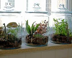 Small Picture Indoor Herb Garden Containers Interior Design Interior Design
