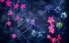 Flowers Hd Wallpaper, Creative Flowers ...